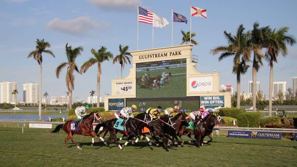 Gulfstream horse racing betting odds stefan dieterle bettingen notaire